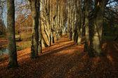 美丽的秋天公园景色在阳光明媚的天气 — 图库照片