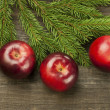 Red apples on a fir tree branches — Stock Photo