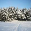 Winter landscape with snow covered forest — Stock Photo #37546721