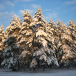 Winter landscape with snow covered forest — Stock Photo