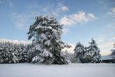 Winter Etnographic park, Riga, Latvia — Stock Photo