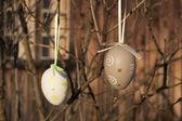 Paskalya yumurtaları bir dalda asılı — Stok fotoğraf