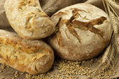 Fresh baked traditional bread — Stock Photo