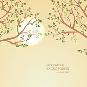 Sunset on a background of tree branches — Stock Vector