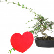 Bonsai with heart — Stock Photo