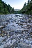 Mountain river in the Allgäu — Stock Photo
