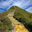 Golden path to the goal. - Photo