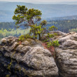 Tree on cliff top — Stock Photo