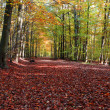 Stock Photo: Forest in autumn beech forest.