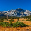 Tuolumne meadows in summer, Yosemite National Park. — Lizenzfreies Foto