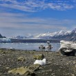 Stock Photo: View to Margerie and Grand Pacific glaciers with landed iceber