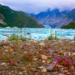 Stock Photo: Wild flowers near Mc'Bride glacier in Glacier Bay National Park.