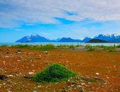 Wild flowers in Glacier Bay National Park, Alaska — Stock Photo