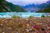 Wild flowers near Mc'Bride glacier in Glacier Bay National Park. — Stock Photo