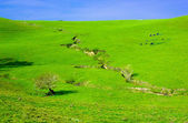 Soil erosion on farmlands — Stock Photo