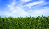 Green lawn background — Stock Photo