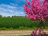 Windmolen power generator. — Stockfoto
