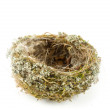 Stock Photo: Real empty bird nest on white