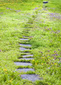 Pathway thru camomiles and dandelions — Stock Photo