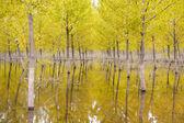 Yellow trees on water - beautiful scenary — Stock Photo