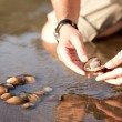 Man picking shells from the river in small waters- into the wild series - Stock Photo