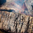 Stock Photo: Structure of burned tree
