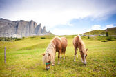 Two horses grazing — Stock Photo
