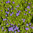 Stock Photo: Purple flowers on green leaves background