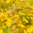 Yellow plant — Stock Photo