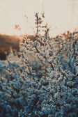 Flowers of an cherry-tree — Stock Photo