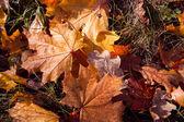 Pestré a jasné pozadí z padlých podzimní listy — Stock fotografie