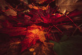 Colorful and bright background made of fallen autumn leaves — Stock Photo