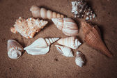 Fondo de conchas marinas - shot macro de hermosas conchas — Foto de Stock