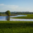 Green grass field and city far off. Focus on the foreground!!! Shallow DOF!!! — Stock Photo #47600799