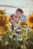Love couple standing outdoors in sunflower field — Stock Photo