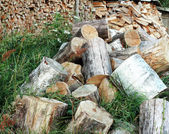 Sawn for cooking firewood tree trunks. — Stock Photo