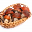 Mushrooms, aspen mushrooms in a wicker basket on a white backgro — Stock Photo