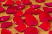 The red rose petals. — Stock Photo