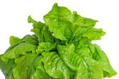Green lettuce leaves on a white background — Stock Photo