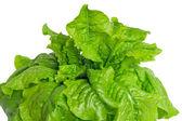 Grüne salatblätter auf weißem hintergrund — Stockfoto