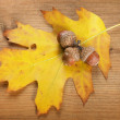 Autumn oak leaf and three acorns on wooden background — Stock Photo #32337137