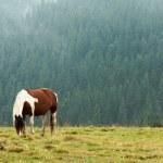Horse — Stock Photo #31831099