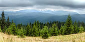As montanhas dos cárpatos — Fotografia Stock