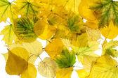 Autumn background 2 — Stock Photo