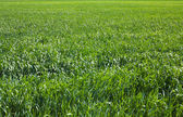Big green field — Stock Photo