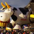 Stock Photo: ALBUQUERQUE, NEW MEXICO, US- OCTOBER 06: Creamland Cow hot air balloon was featured attraction at 40th edition of Albuquerque International Balloon Fiestheld in October 2011.