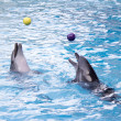 Dolphins with balls — Stockfoto