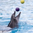 Dolphin with balls — Stock Photo