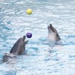 Dolphins with balls — Stock Photo