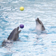 Stock Photo: Dolphins with balls